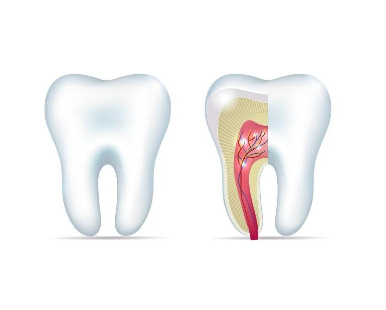 root canal diagram | chesterfield mo dentist